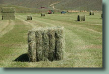 Hay for sale, just outside beautiful Steamboat Springs, Colorado